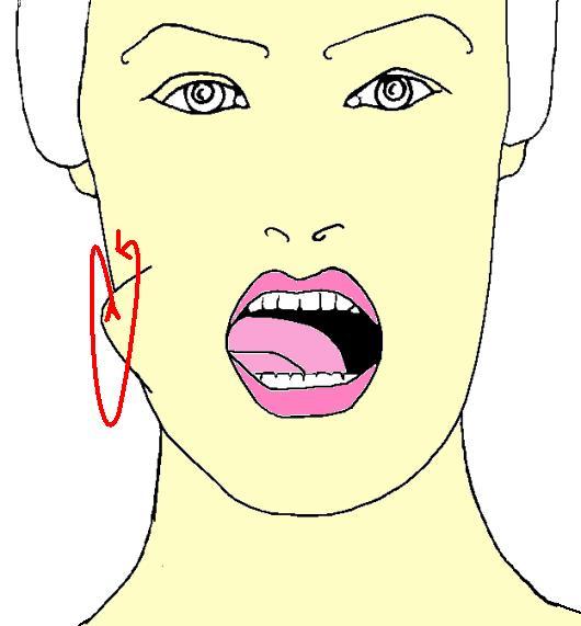 Gemütlich Anatomie Der Zunge In Der Backe Fotos - Anatomie Von ...